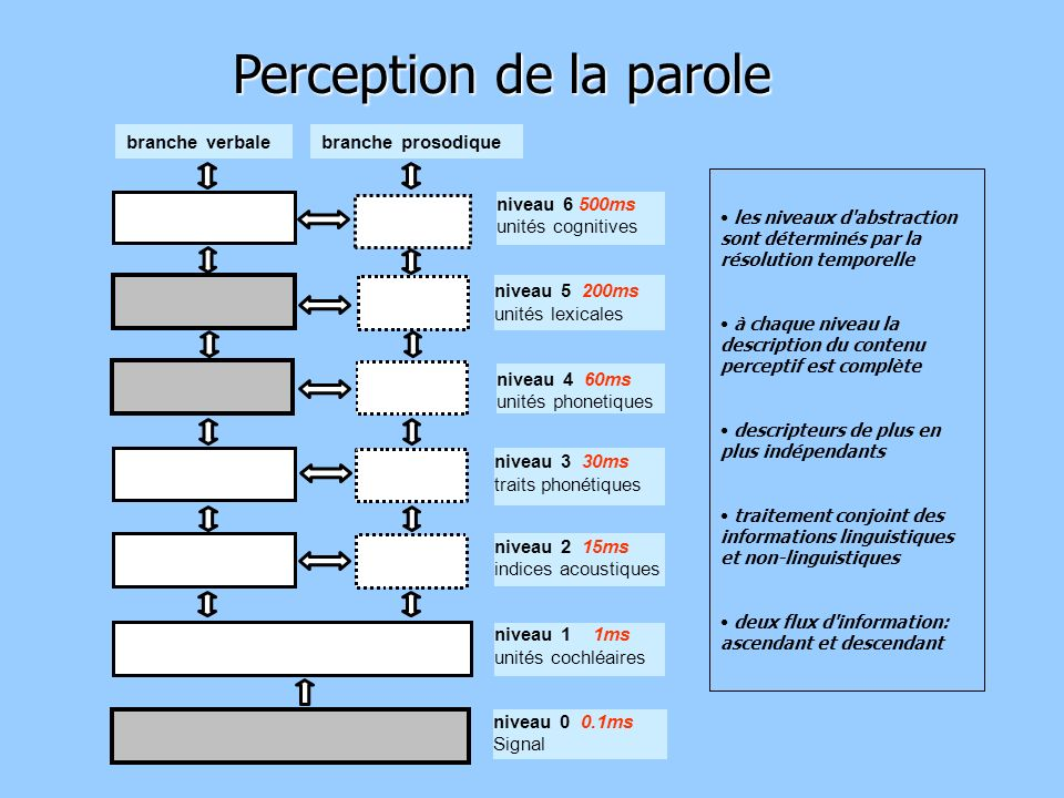 Perception de la parole