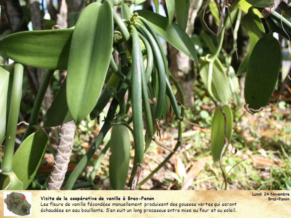  Visite de la coopérative de vanille à Bras-Panon