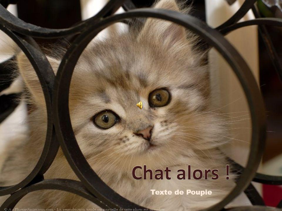 Chat alors ! Texte de Poupie