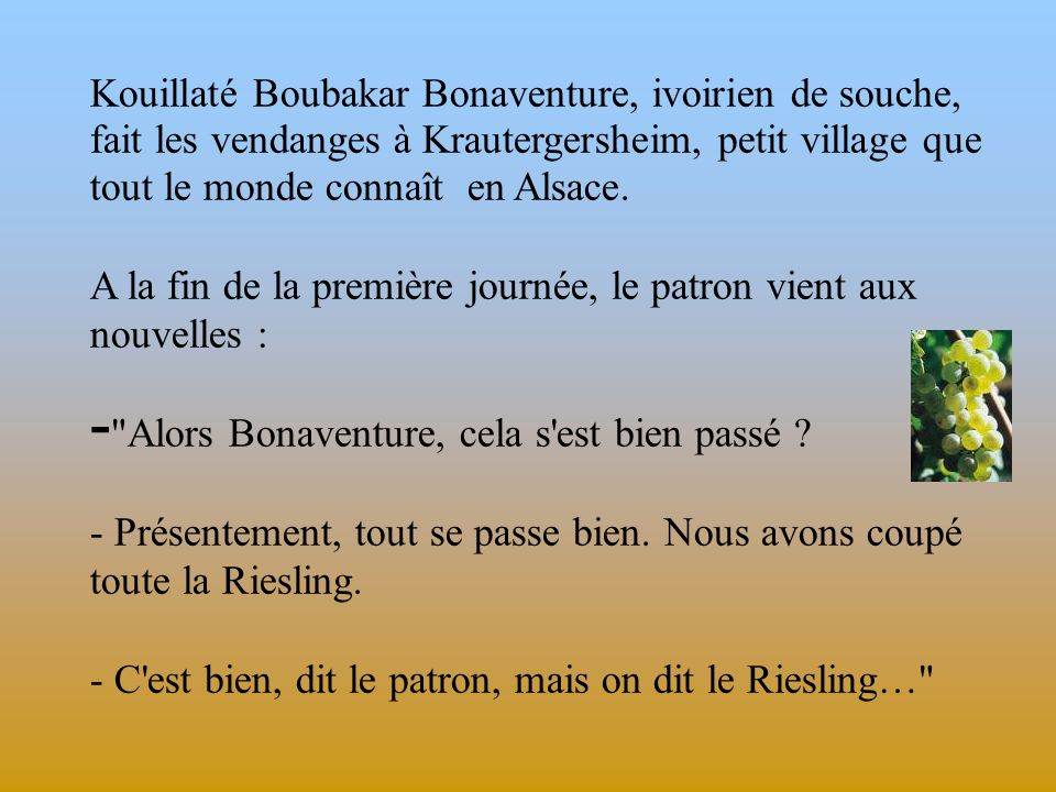 Kouillaté Boubakar Bonaventure, ivoirien de souche, fait les vendanges à Krautergersheim, petit village que tout le monde connaît en Alsace.