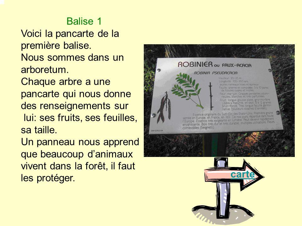 Balise 1 Voici la pancarte de la première balise. Nous sommes dans un arboretum.