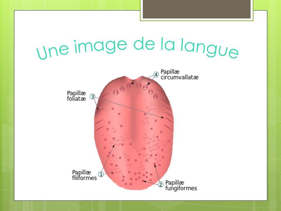 Une image de la langue