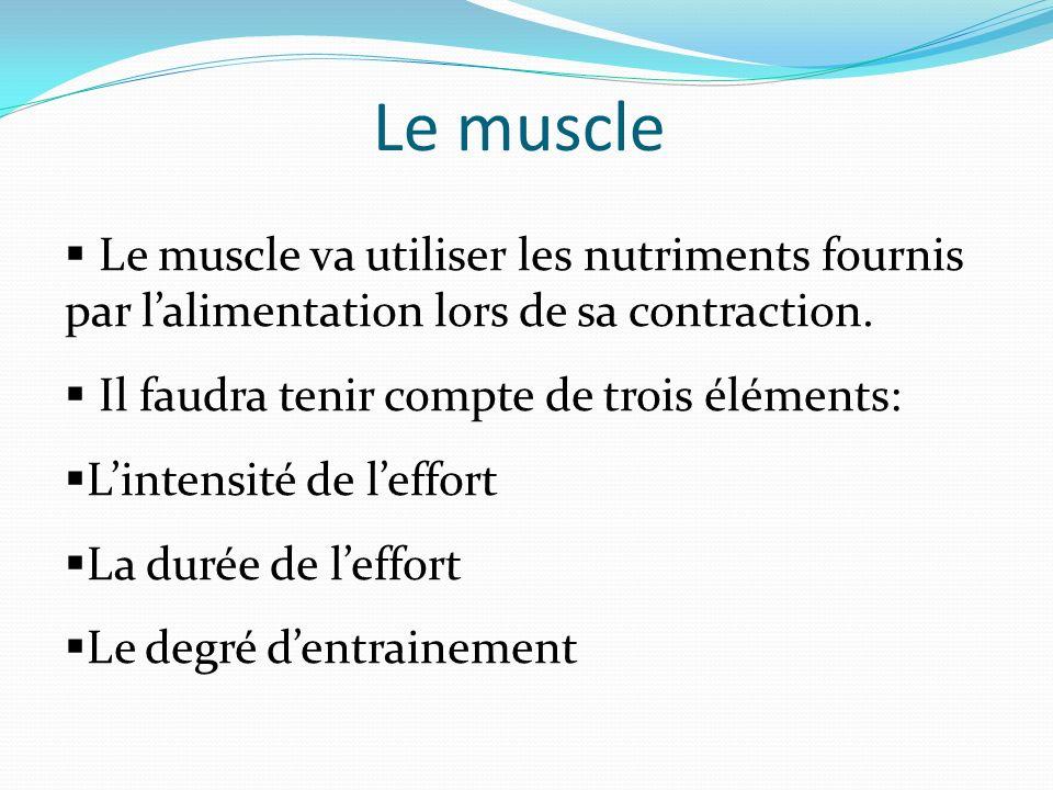 Le muscle Le muscle va utiliser les nutriments fournis par l'alimentation lors de sa contraction. Il faudra tenir compte de trois éléments: