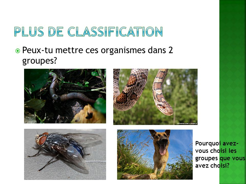 Plus de classification