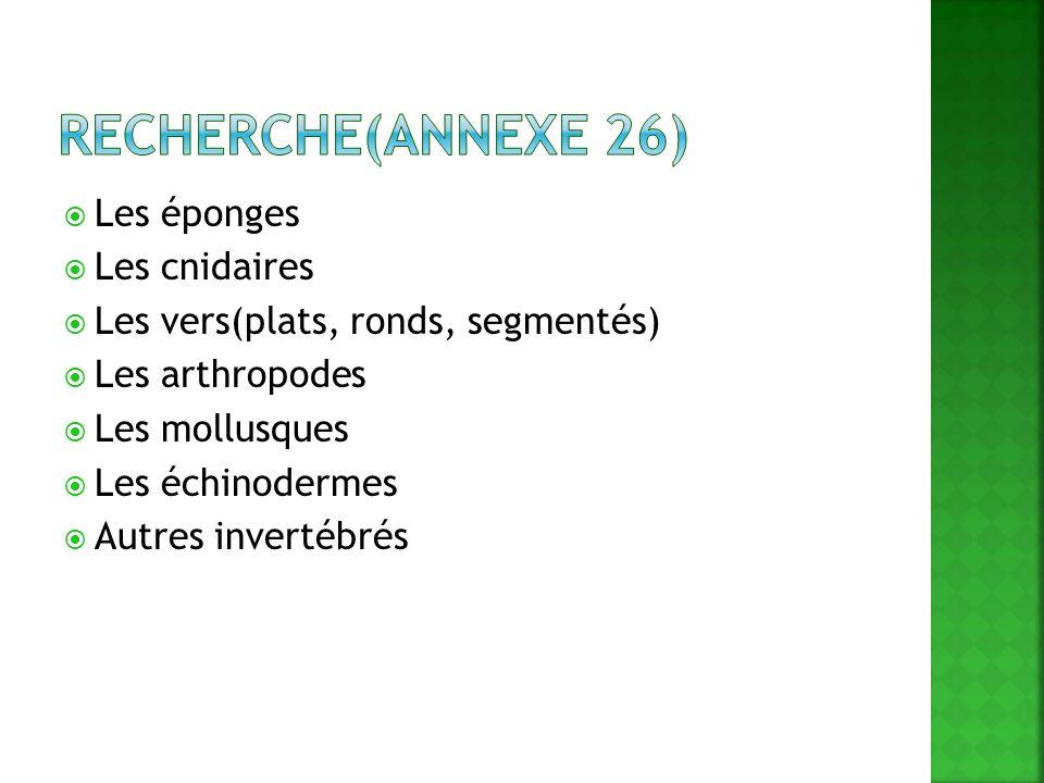 Recherche(annexe 26) Les éponges Les cnidaires
