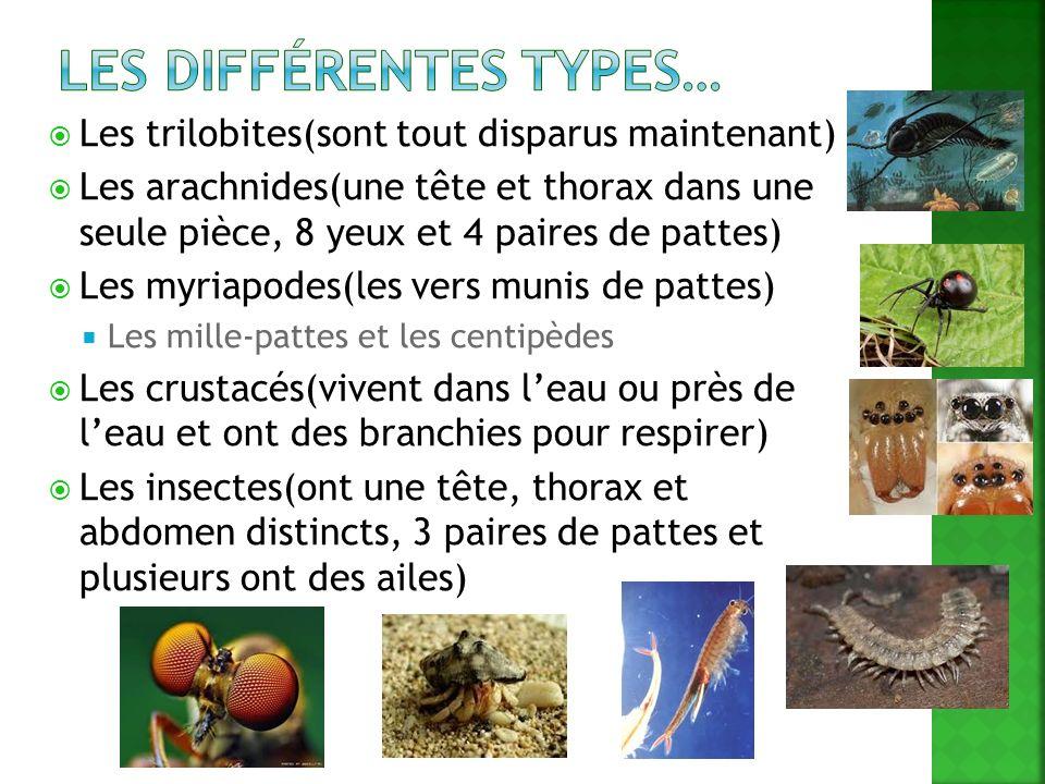Les différentes types…