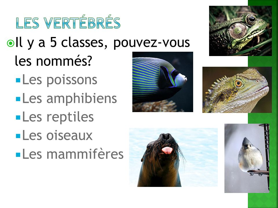 Les vertébrés Il y a 5 classes, pouvez-vous les nommés Les poissons
