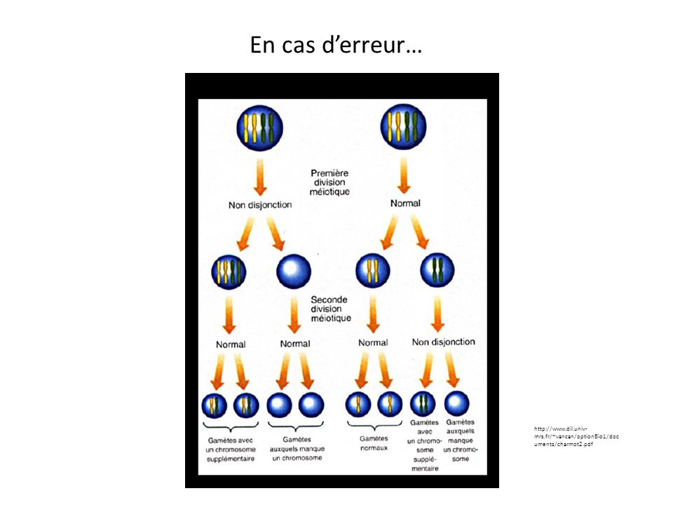 En cas d'erreur… http://www.dil.univ-mrs.fr/~vancan/optionBio1/documents/charmot2.pdf