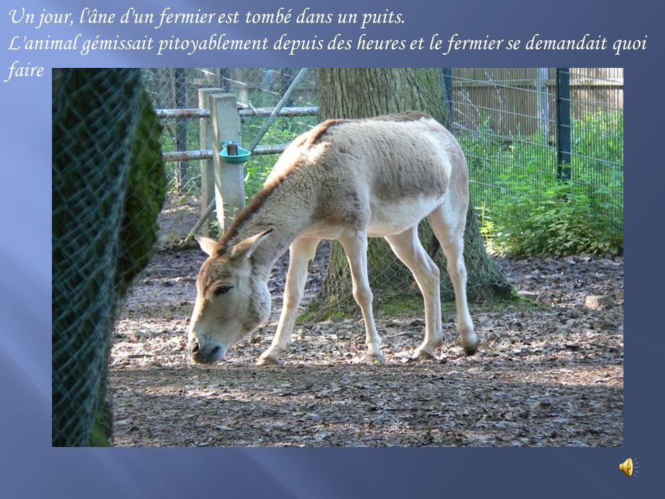 Un jour, l âne d un fermier est tombé dans un puits