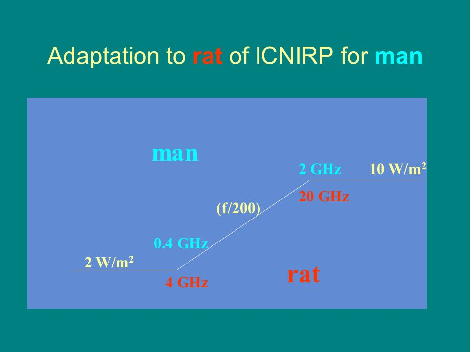 Adaptation to rat of ICNIRP for man