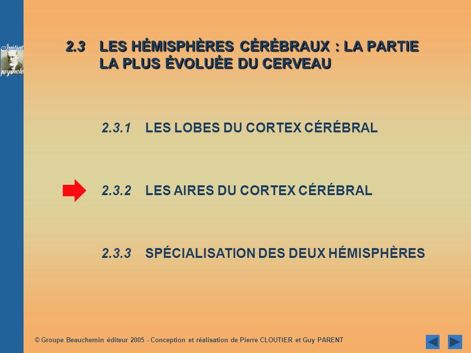 2.3 LES HÉMISPHÈRES CÉRÉBRAUX : LA PARTIE LA PLUS ÉVOLUÉE DU CERVEAU