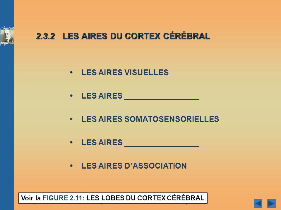 2.3.2 LES AIRES DU CORTEX CÉRÉBRAL