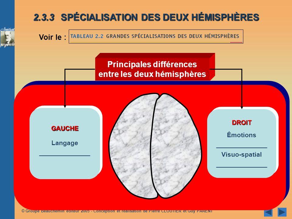 Principales différences entre les deux hémisphères