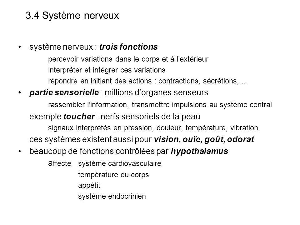 3.4 Système nerveux système nerveux : trois fonctions