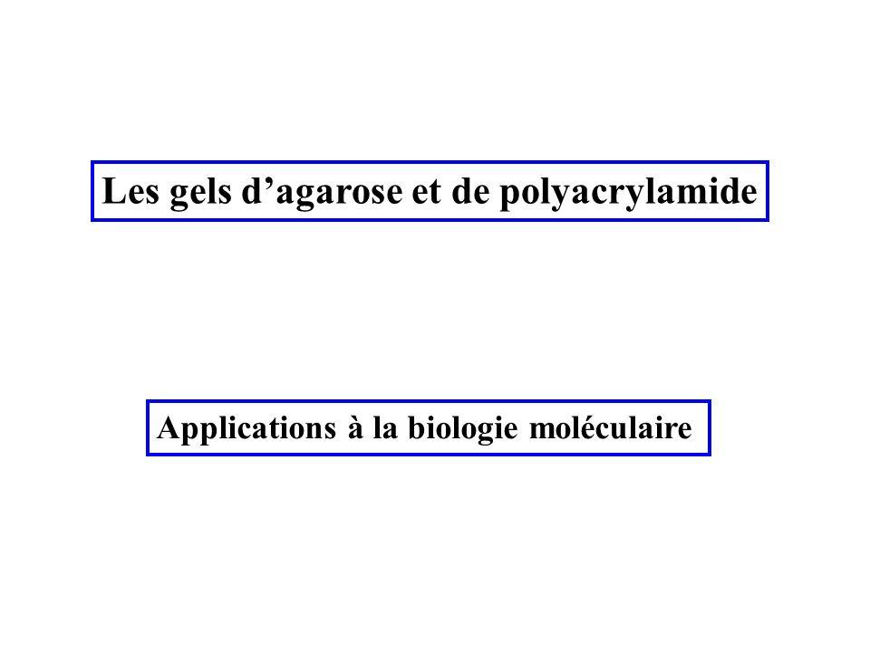 Les gels d'agarose et de polyacrylamide