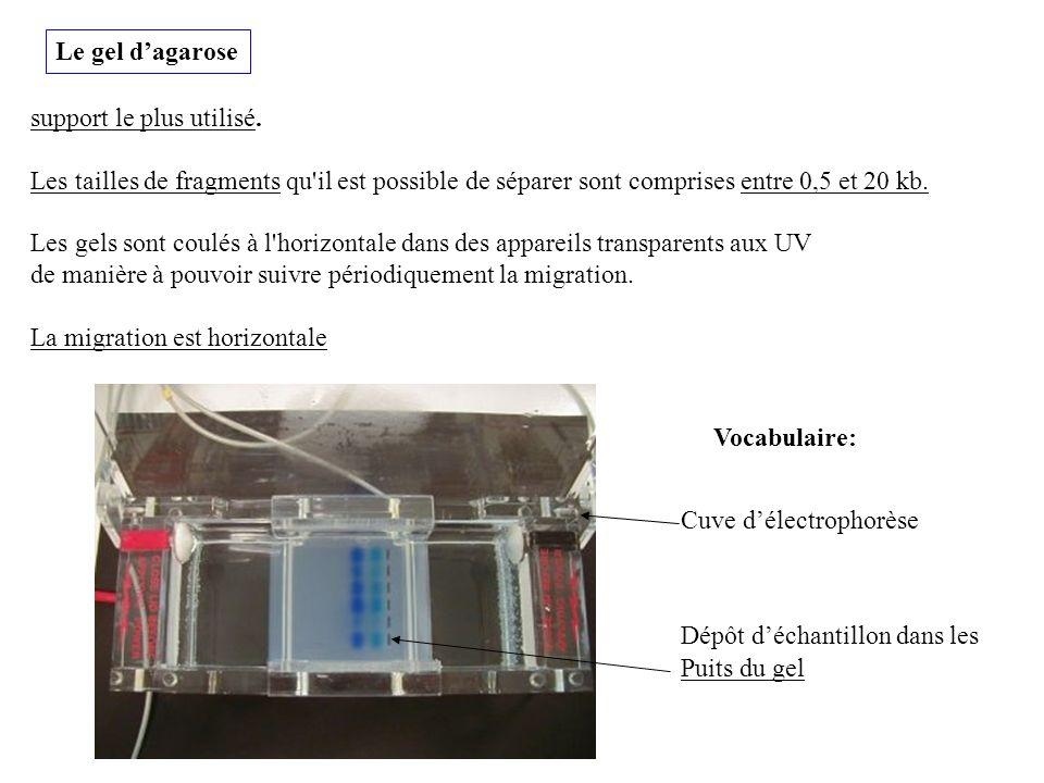 Le gel d'agarose support le plus utilisé. Les tailles de fragments qu il est possible de séparer sont comprises entre 0,5 et 20 kb.