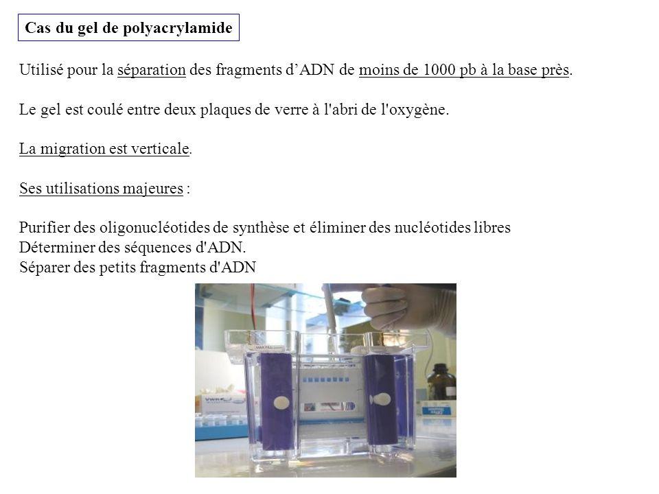 Cas du gel de polyacrylamide
