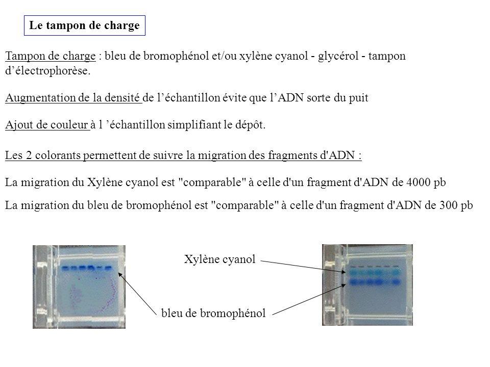 Le tampon de charge Tampon de charge : bleu de bromophénol et/ou xylène cyanol - glycérol - tampon d'électrophorèse.