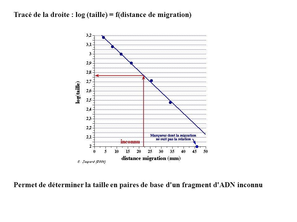 Tracé de la droite : log (taille) = f(distance de migration)