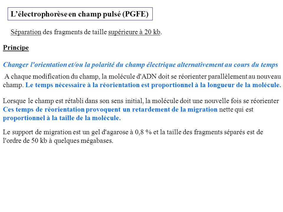 L'électrophorèse en champ pulsé (PGFE)