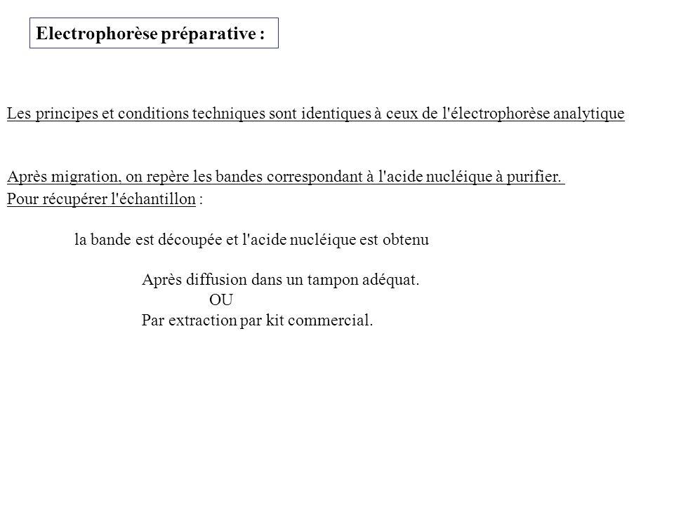 Electrophorèse préparative :