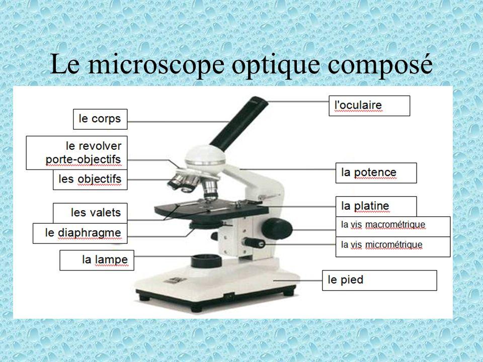 Le microscope optique composé
