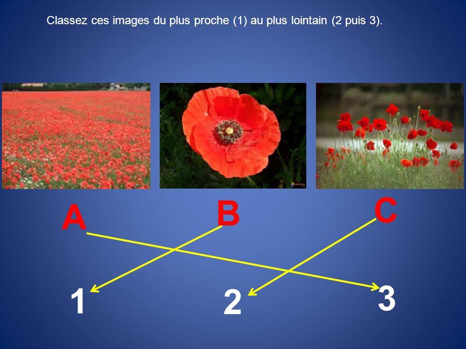 Classez ces images du plus proche (1) au plus lointain (2 puis 3).