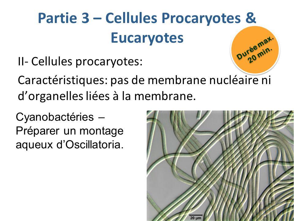 Partie 3 – Cellules Procaryotes & Eucaryotes
