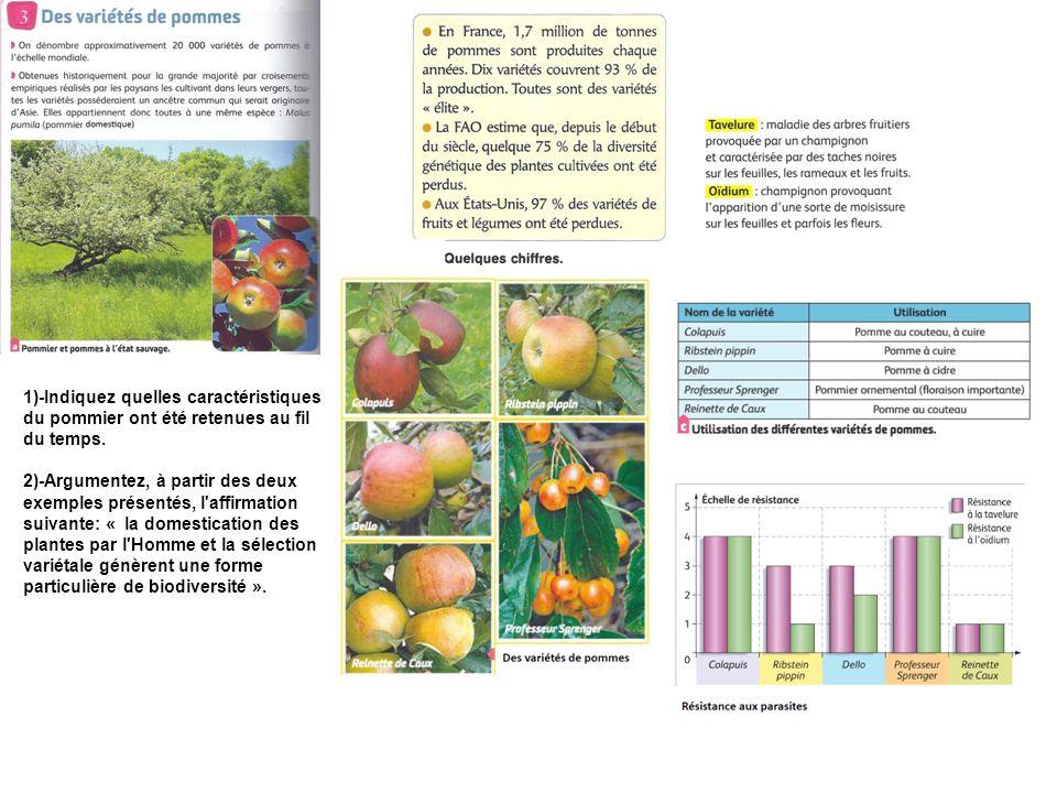 1)-Indiquez quelles caractéristiques du pommier ont été retenues au fil du temps.