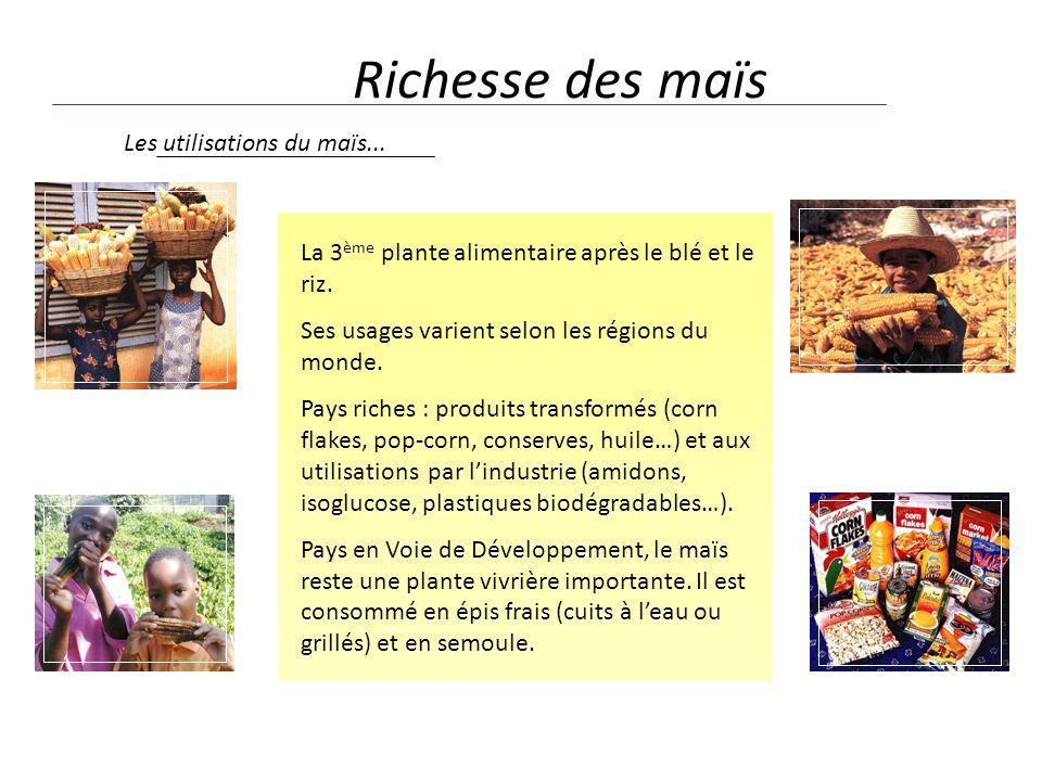 Richesse des maïs Les utilisations du maïs...