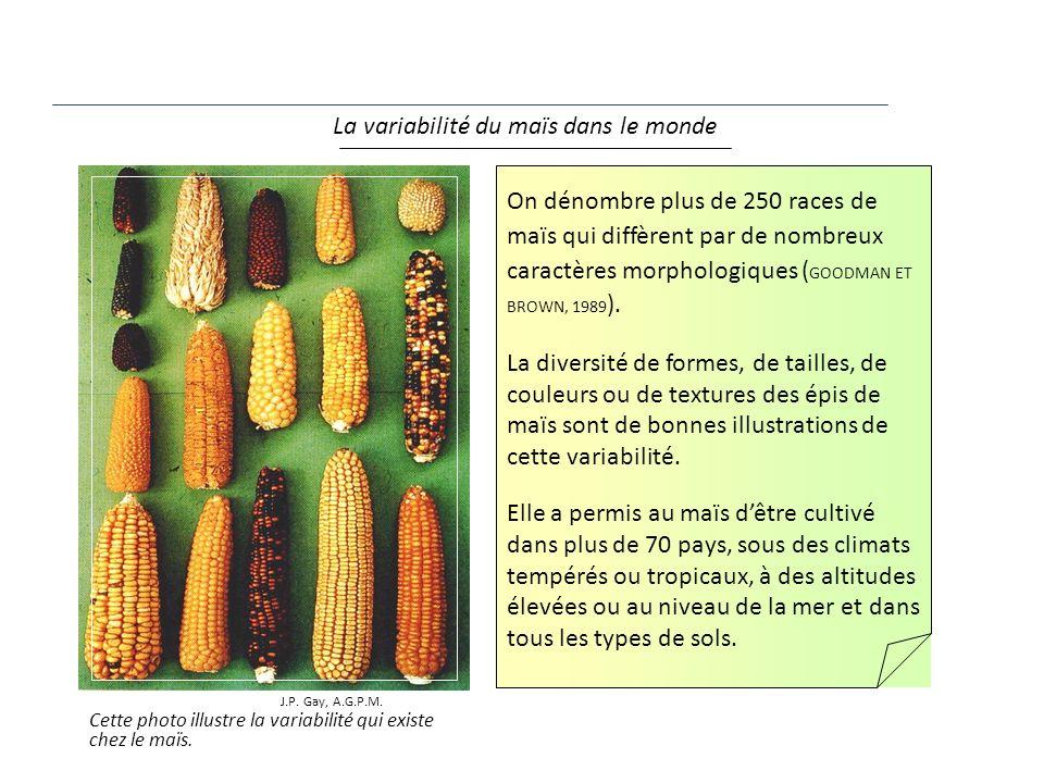 La variabilité du maïs dans le monde