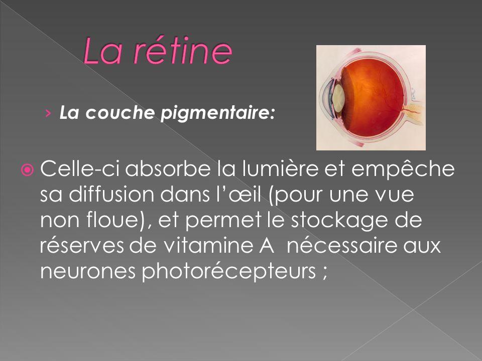 La rétine La couche pigmentaire: