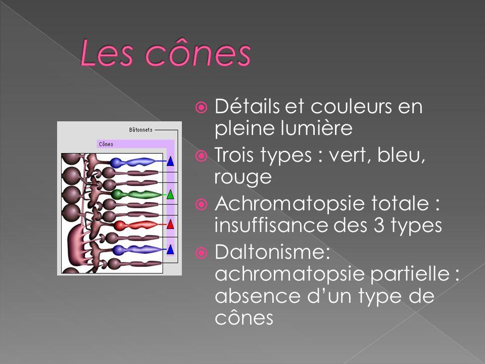 Les cônes Détails et couleurs en pleine lumière