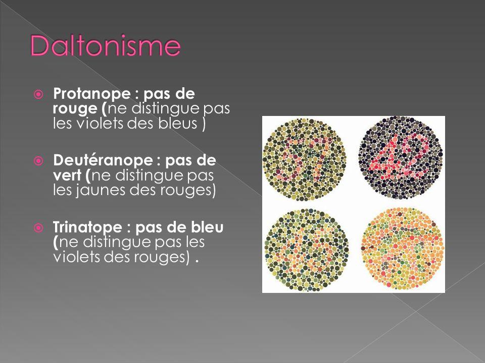 Daltonisme Protanope : pas de rouge (ne distingue pas les violets des bleus ) Deutéranope : pas de vert (ne distingue pas les jaunes des rouges)