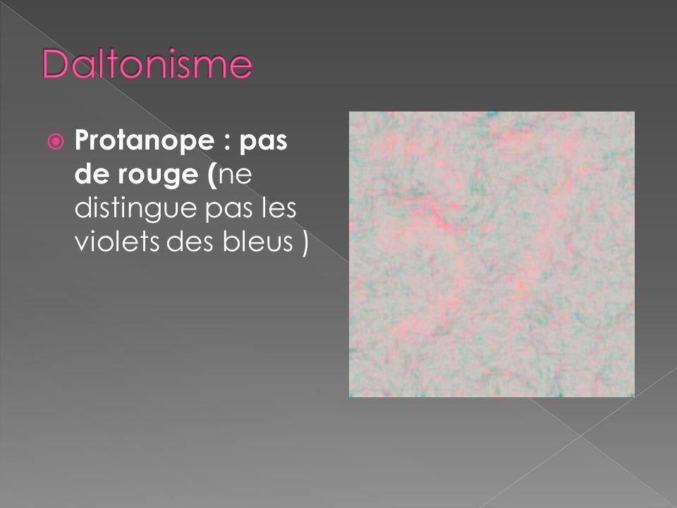 Daltonisme Protanope : pas de rouge (ne distingue pas les violets des bleus )