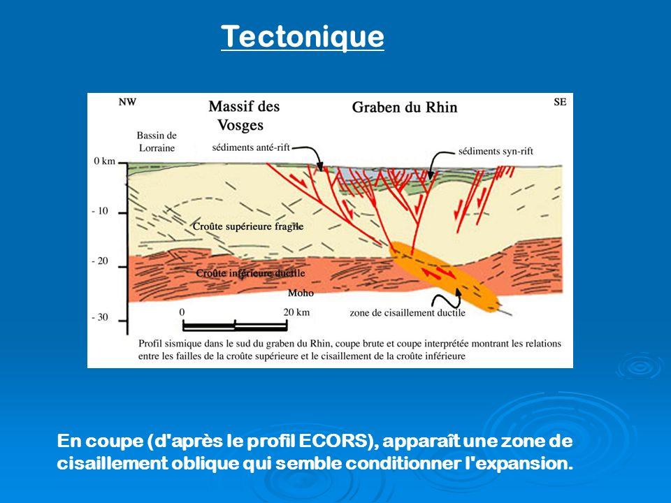 Tectonique En coupe (d après le profil ECORS), apparaît une zone de cisaillement oblique qui semble conditionner l expansion.