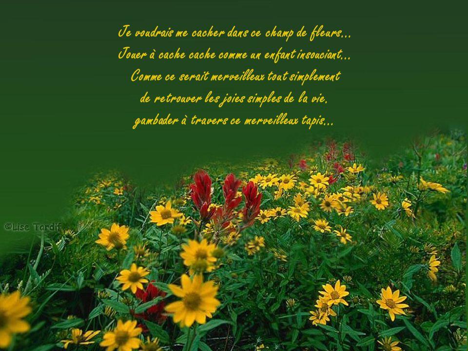 Je voudrais me cacher dans ce champ de fleurs…