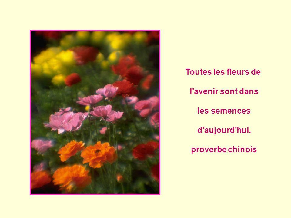 toutes les fleurs de l 39 avenir sont dans les semences d 39 aujourd 39 hui ppt t l charger. Black Bedroom Furniture Sets. Home Design Ideas