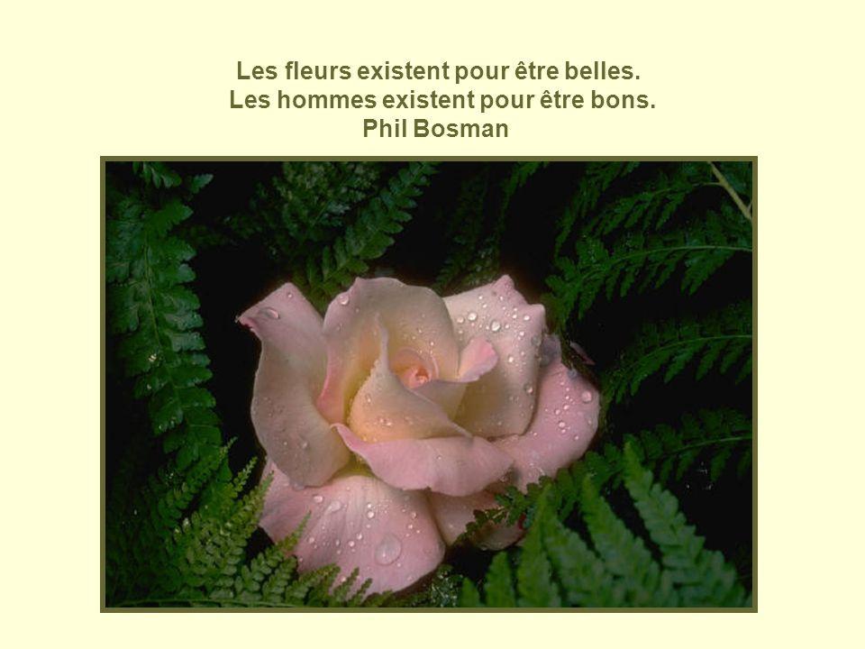 Les fleurs existent pour être belles.