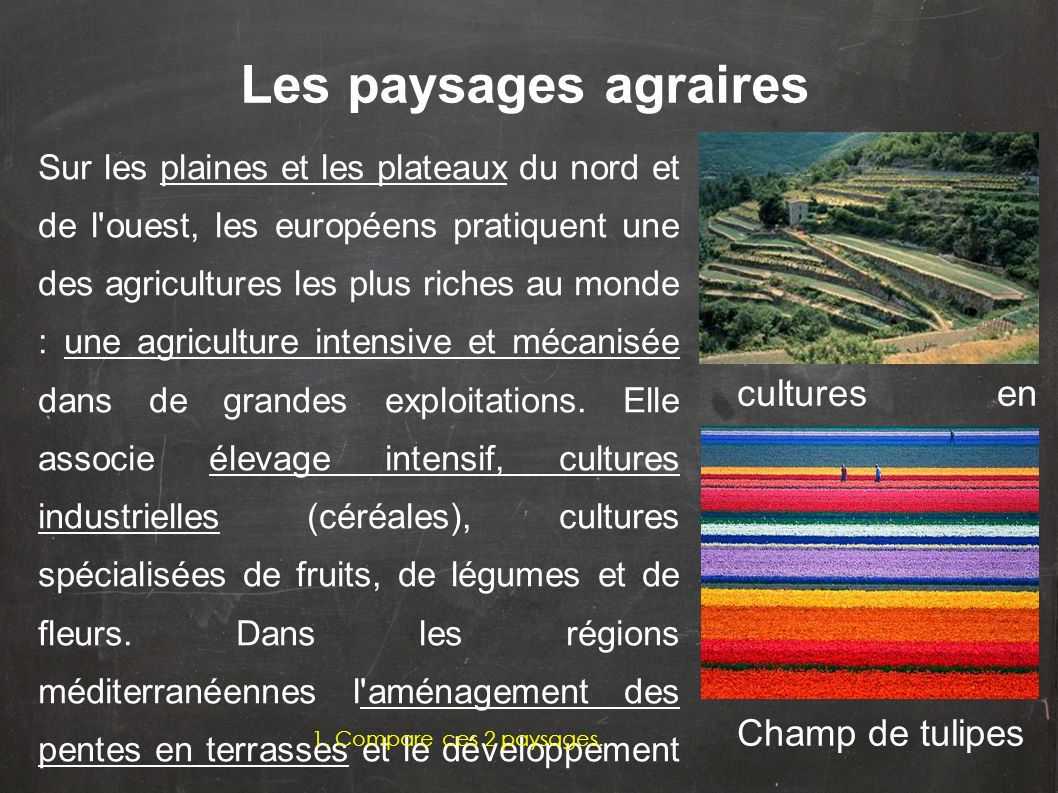 Les paysages agraires cultures en terrasses Champ de tulipes