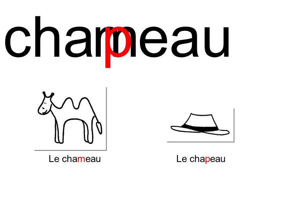 cha m p eau Le chameau Le chapeau