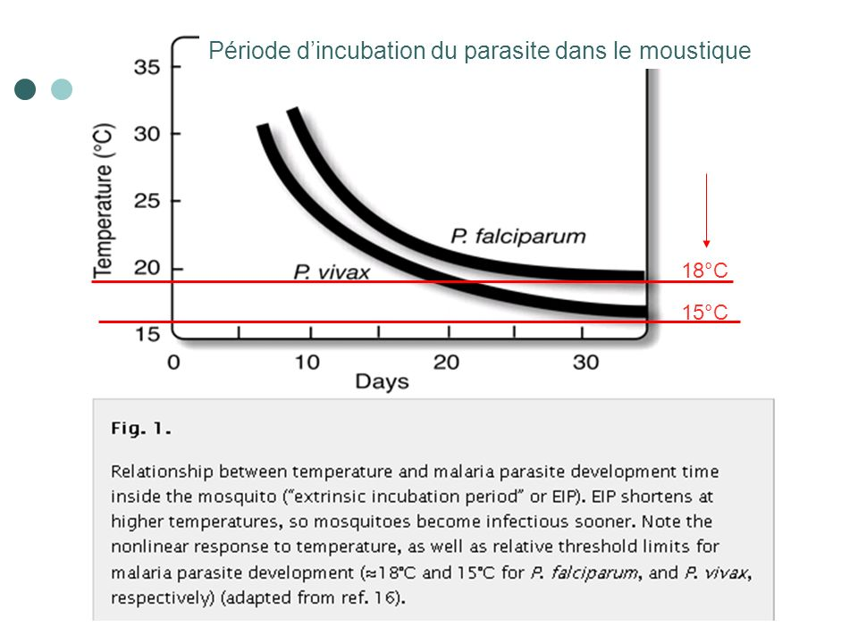 Période d'incubation du parasite dans le moustique