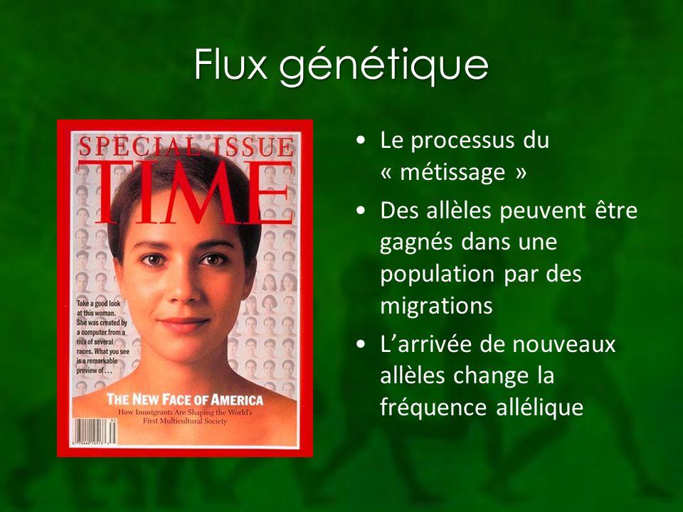 Flux génétique Le processus du « métissage »