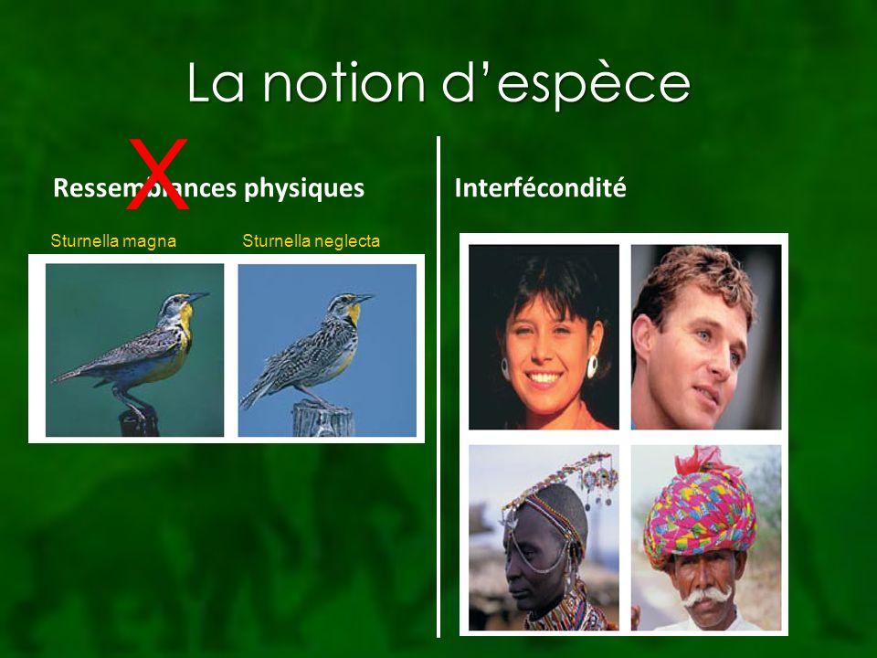 X La notion d'espèce Ressemblances physiques Interfécondité