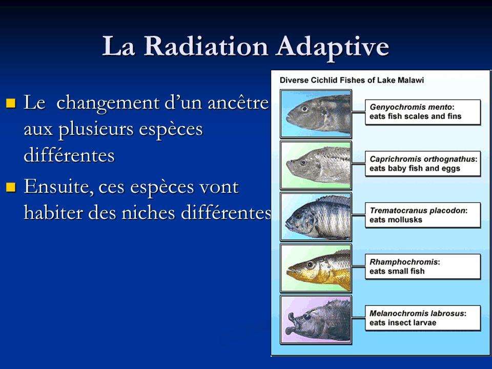 La Radiation Adaptive Le changement d'un ancêtre aux plusieurs espèces différentes.