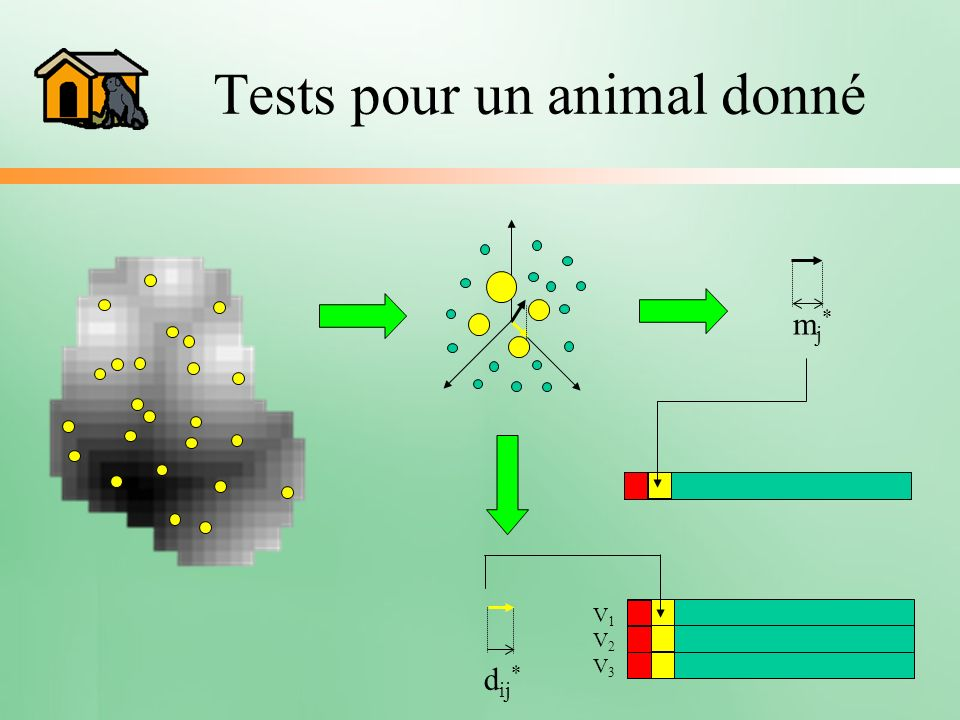 Tests pour un animal donné