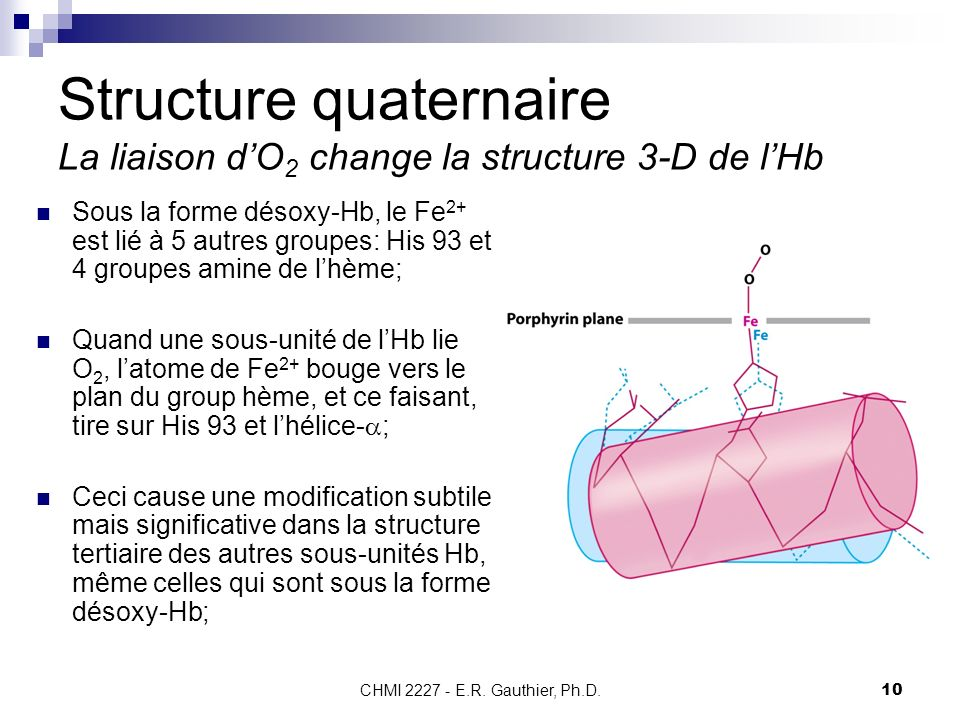 Structure quaternaire La liaison d'O2 change la structure 3-D de l'Hb