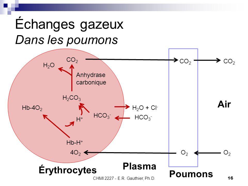 Échanges gazeux Dans les poumons