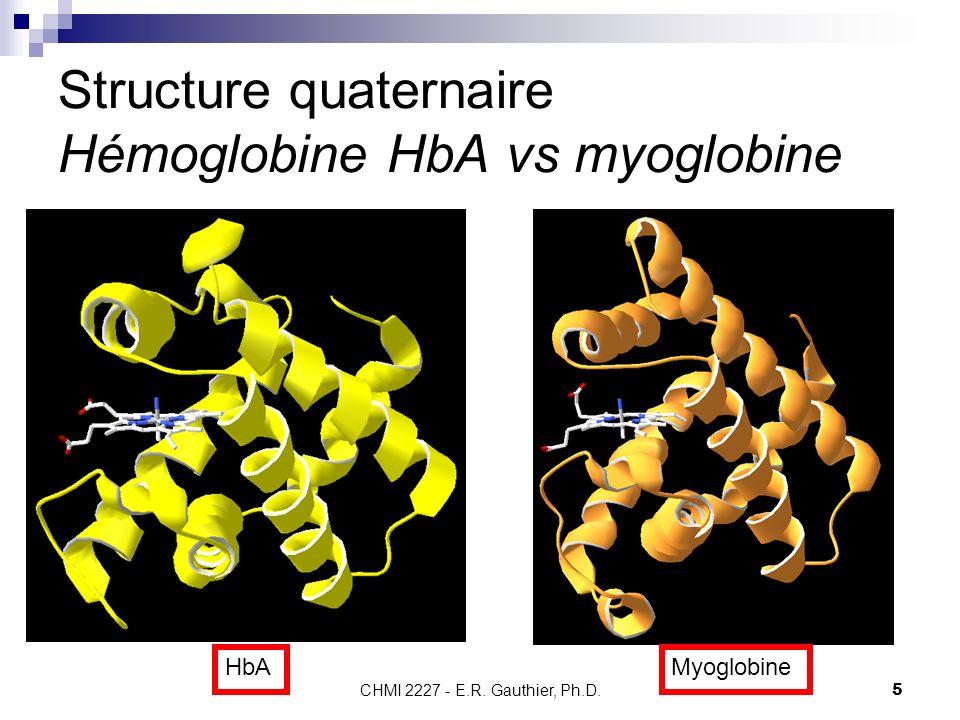 Structure quaternaire Hémoglobine HbA vs myoglobine