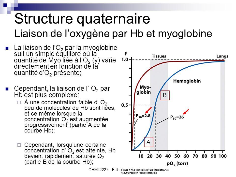 Structure quaternaire Liaison de l'oxygène par Hb et myoglobine